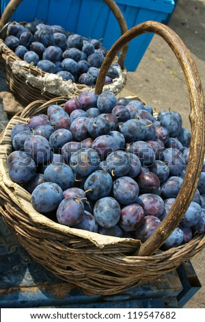 Beautiful and delicious fruit of plum - Prunus domestica L. - stock photo