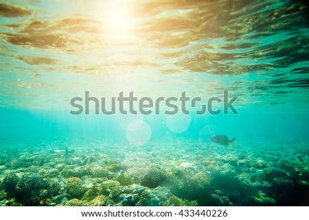beautiful and diverse coral reef with fish of the red sea in Egypt, shooting under water - stock photo
