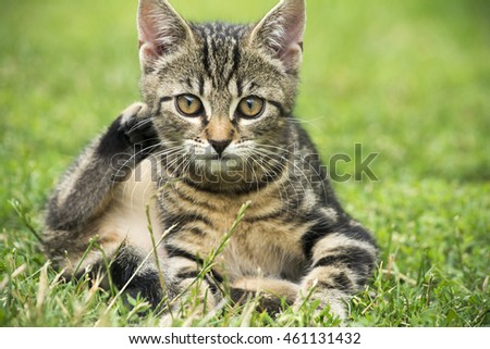 Beautiful and young kitten in the garden