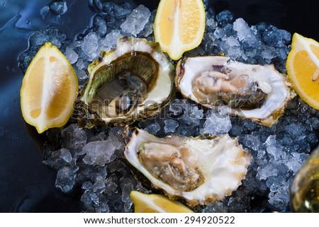 beautiful appetizer oysters luxury life background studio food - stock photo