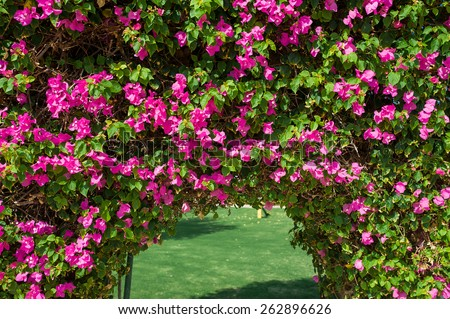 Beautiful arch of red flowers on the hotel. - stock photo