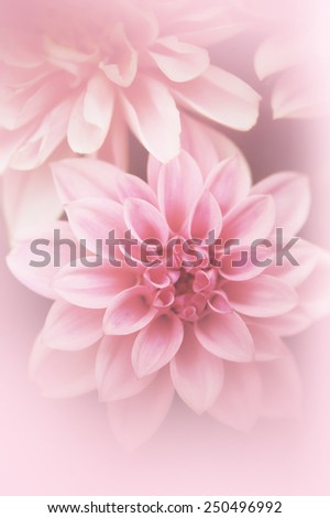 Beautiful, artistic, floral background with  pink dahlia - stock photo