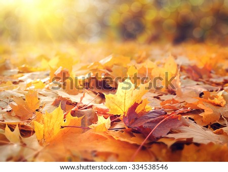 Beautiful autumn background with maple leaves - stock photo