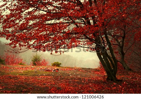 Beautiful autumn day into the forest - stock photo