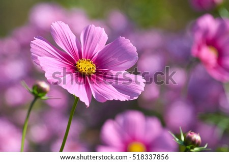 Beautiful autumn flower close up