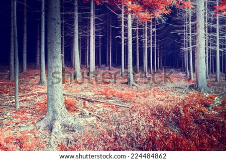 Beautiful autumn forest in red and orange tone - stock photo