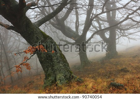Beautiful autumn forest in the fog - stock photo