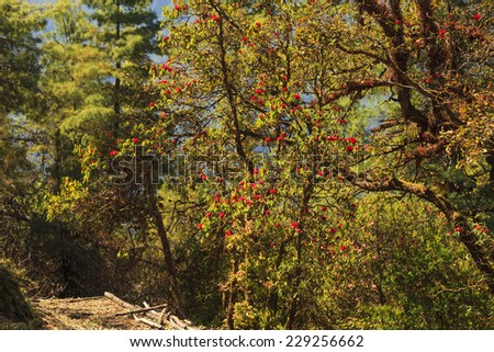 Beautiful autumn forest in the mountains - stock photo