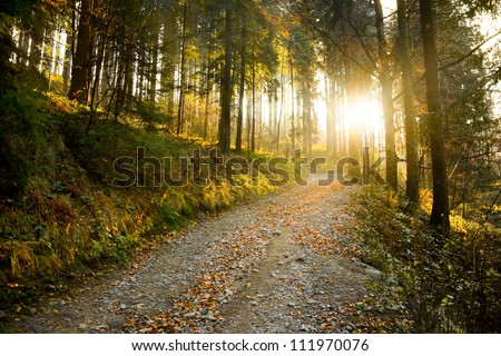 Beautiful autumn forest mountain path at sunset