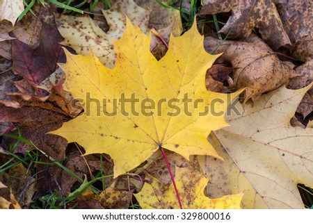 Beautiful autumn forest scenery with colorful leaves  - stock photo