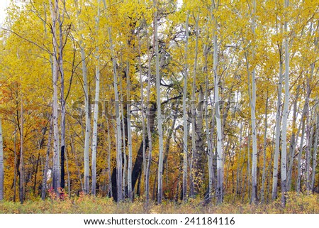 beautiful autumn landscape autumn forest with colorful leaves on a warm sunny day