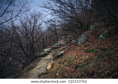 Beautiful autumn landscape in a mountain forest