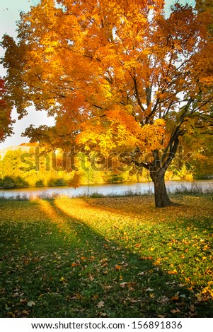 Beautiful Autumn landscape of sunset colored trees and warm colored leaves that covers the ground