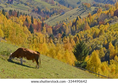 beautiful autumn landscape, sheeps and cows