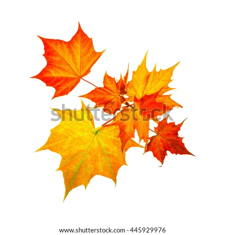 Beautiful autumn leafs isolated on white background - stock photo