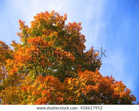 beautiful autumn leaves of maple tree on sky background