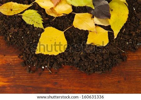 Beautiful autumn leaves on ground on wooden background - stock photo