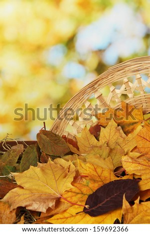 Beautiful autumn leaves on hay with wicker basket on bright background - stock photo