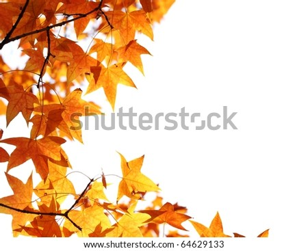 Beautiful autumn maple leaves background - stock photo