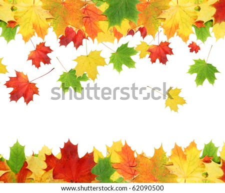 Beautiful autumn maple leaves isolated on white background