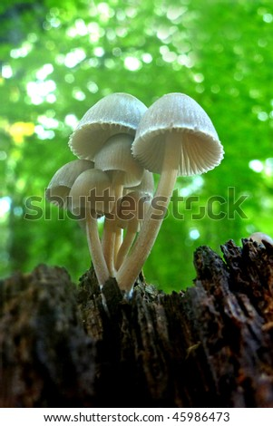 beautiful autumn mushrooms in the forest - stock photo