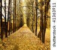 beautiful autumn park - stock photo