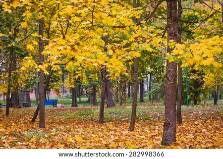 Beautiful autumn park with yellow leaves - stock photo