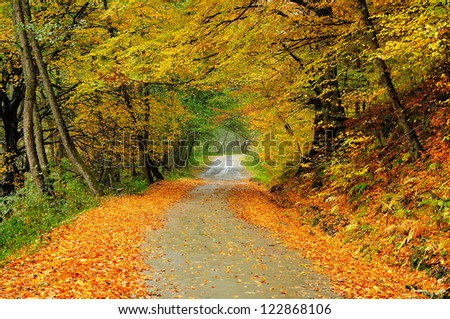 Beautiful autumn road in the forest - stock photo