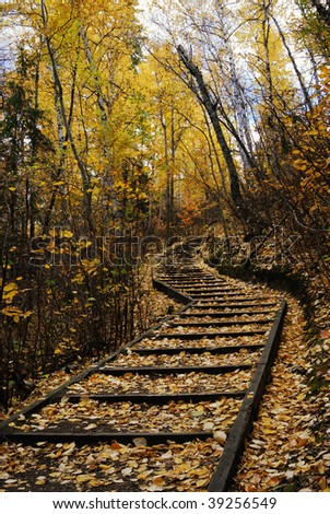 Beautiful autumn scene of a S shape hiking trail covered by golden leaves in forest, north saskatchewan river valley, edmonton, alberta, canada - stock photo
