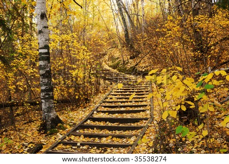 Beautiful autumn scene of a winding hiking trail covered by golden leaves in forest, north Saskatchewan river valley, Edmonton, Alberta, Canada