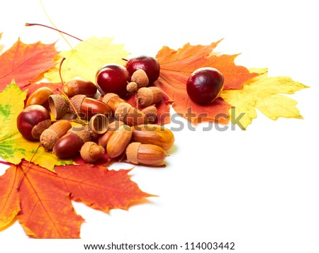 Beautiful autumn still life, which is composed of acorns,  chestnuts and autumn leaves