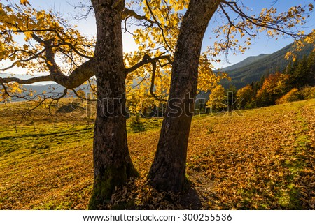 Beautiful autumn tree in the sun against the backdrop of mountains. - stock photo