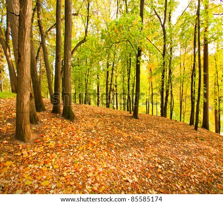 beautiful autumnal forest - stock photo