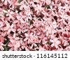 Beautiful backdrop of many small pink flowers - stock photo