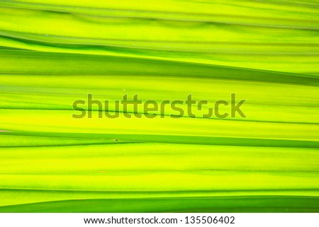 Beautiful background in green leaf - stock photo