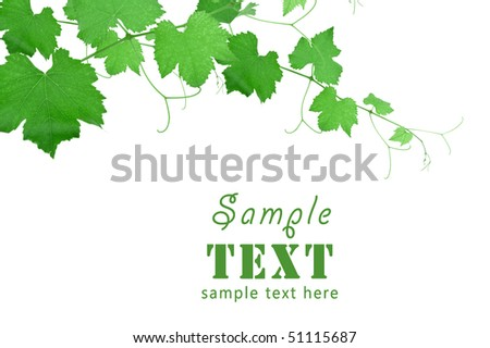 Beautiful background in the form of a young grapevine - stock photo