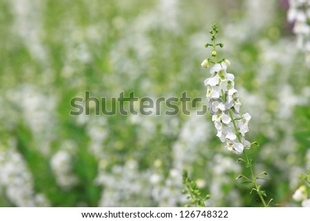 Beautiful background of flower in English garden, shallow DOF. - stock photo