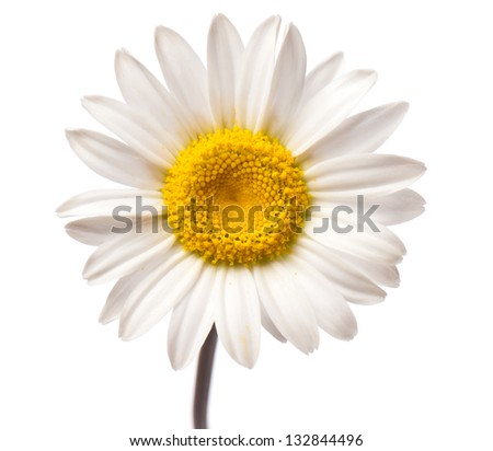 beautiful background of fresh flowers photographed in the studio