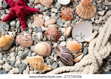 Beautiful background with colorful seashells and ropes lying on seashore - stock photo