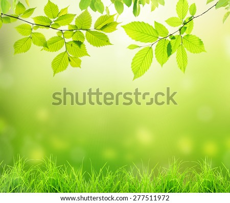 Beautiful bakground from branches with jeaves and grass - stock photo