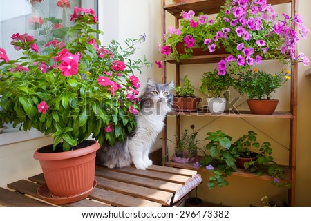 Beautiful balcony with small table, chair and flowers. - stock photo