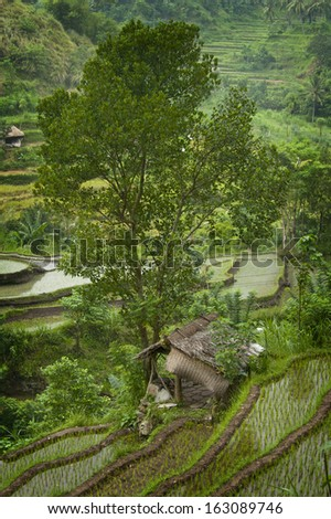 Beautiful Bali. On the road to Amed in east Bali you will come across this beautiful scenic rice terrace. Some of the hillsides are thousands of years old and are an irrigation marvel. - stock photo