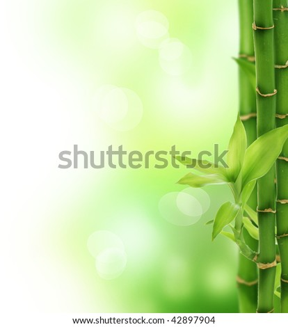 Beautiful Bamboo - stock photo
