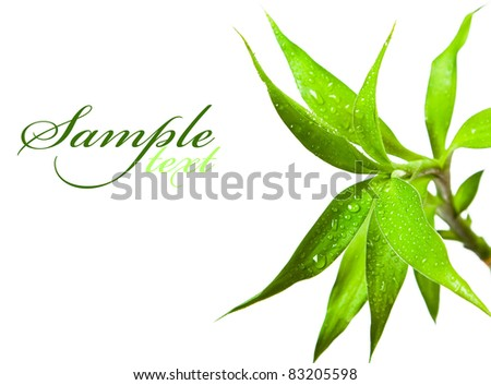 Beautiful bamboo leaves with drops on white background - stock photo
