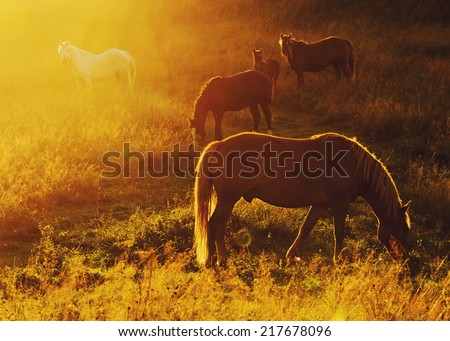 Beautiful bay horse herd grazes in the mountains at sunset, amazing hipster sunny natural background - stock photo