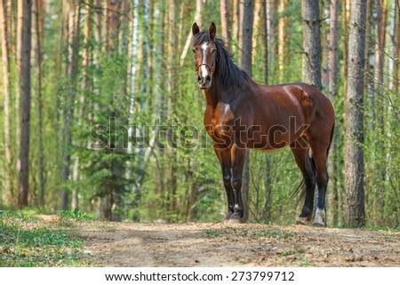 Beautiful bay horse posing in a spring forest. - stock photo