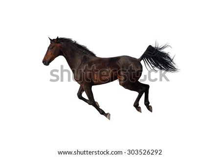 Beautiful bay horse run gallop on white background