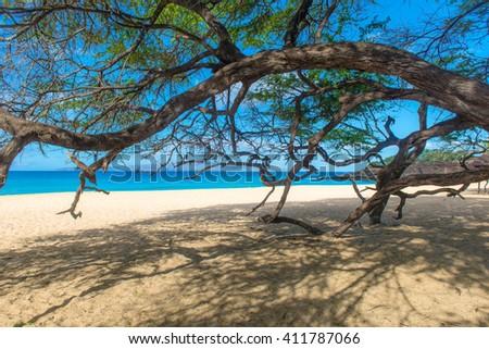 Beautiful beach and tree in Hawaii - stock photo