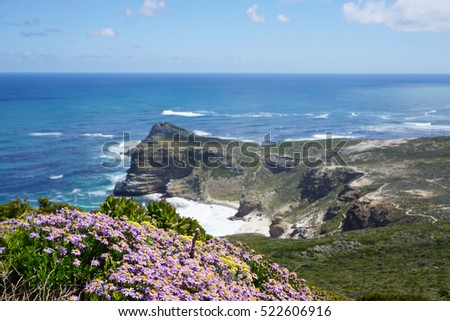 Beautiful beach flower and plants and rocks with ocean background in Cape town, South Africa