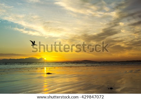 Beautiful beach sunset with flying sea gull silhouette at Strand beach, Helderberg, Cape Town, Western Cape, South Africa.